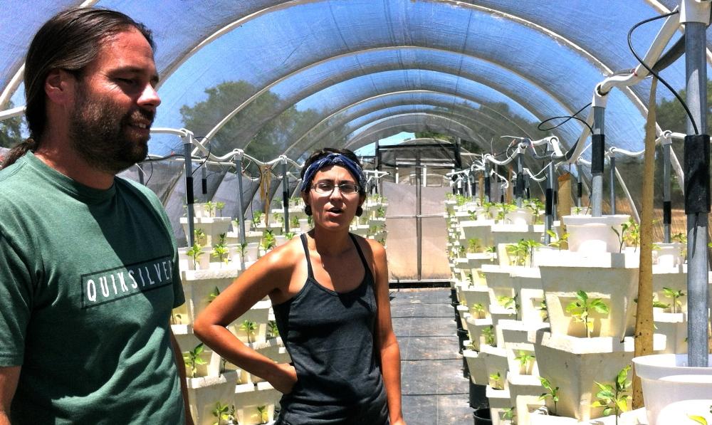 Abbott Organics Small Farm in West  Sacramento: A Little Gem of  Agricultural Ingenuity (3/4)