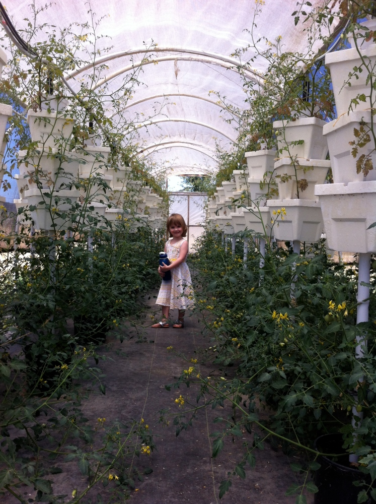 Abbott Organics Small Farm in West  Sacramento: A Little Gem of  Agricultural Ingenuity (2/4)